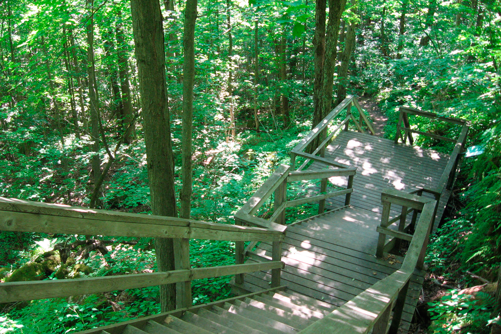 Now that Ontario parks are open, here are our top five for a hiking day trip this weekend