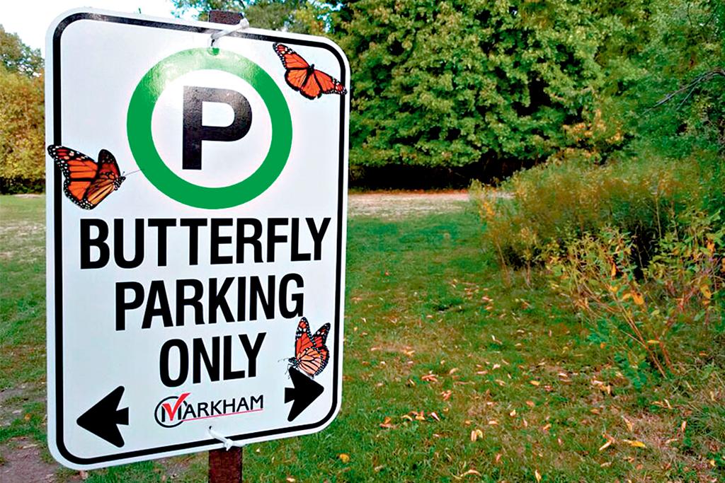 butterflyway