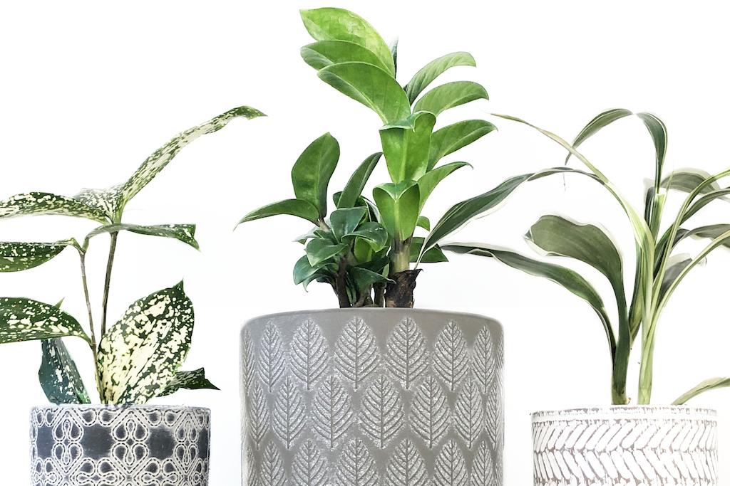 plant pop-up camh