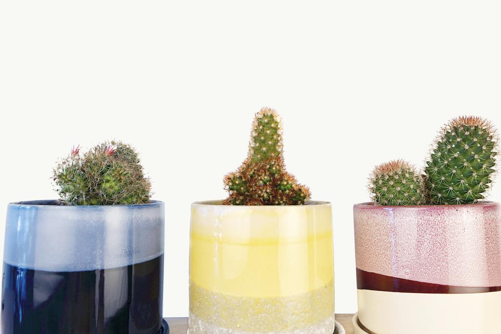 chive plants