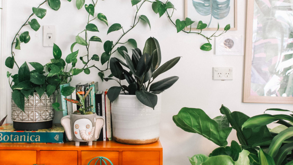 A photo of indoor plants sitting on a shelf.