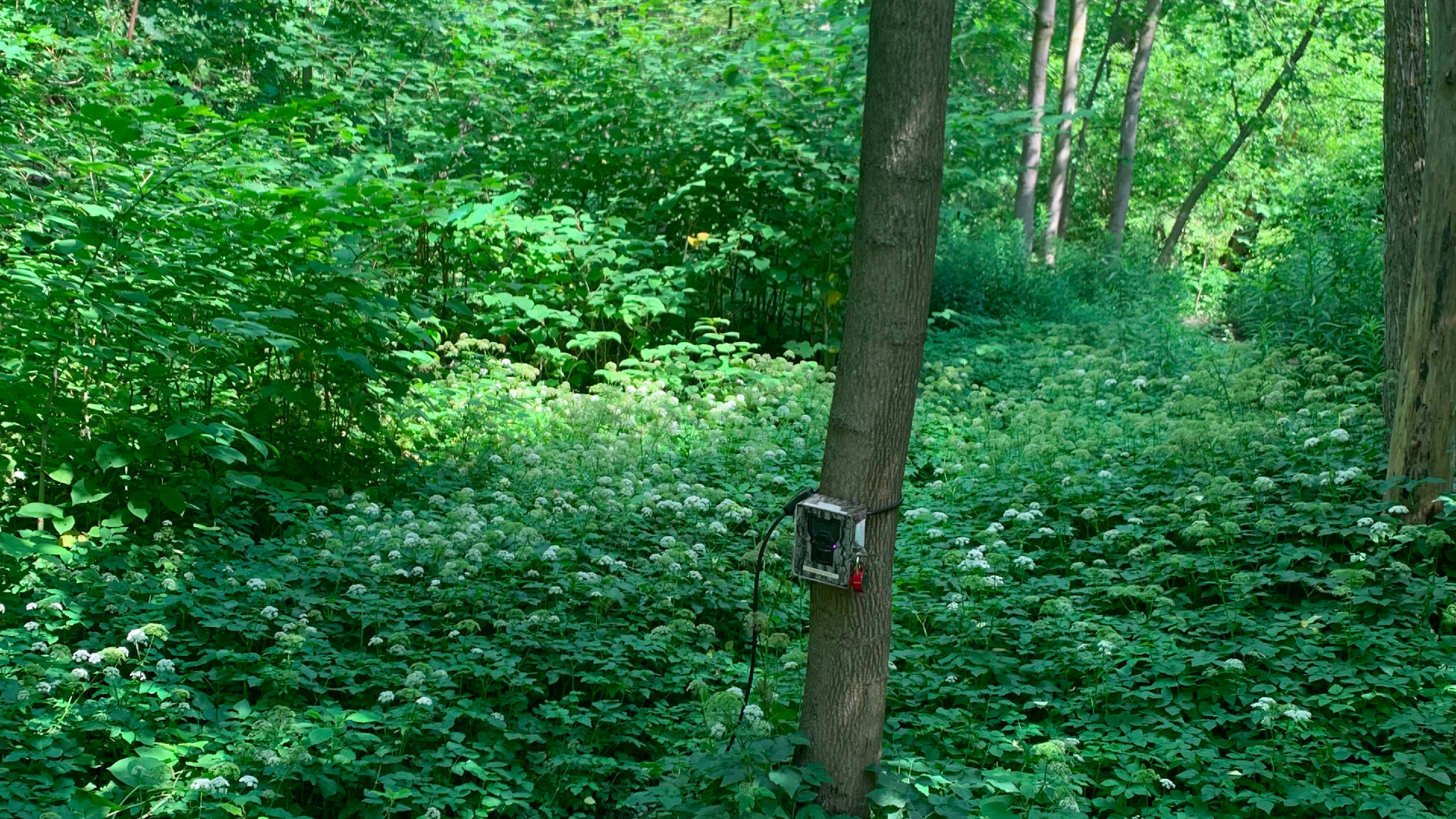 A photo of a photo box in the woods in Toronto.